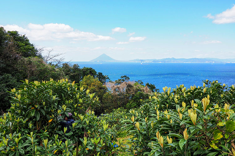 鹿児島県南大隅町根占のびわ畑から望む錦江湾と開門岳